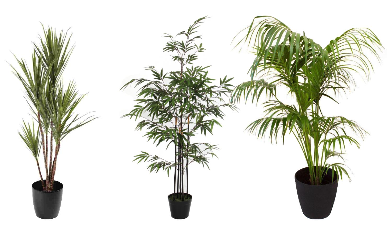 Planten in je badkamer